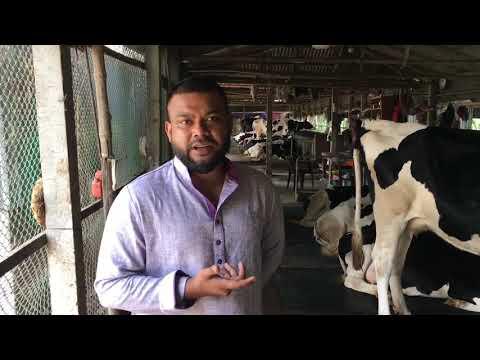 Xxx Mp4 সখ থেকে গড়ে তুলেছেন কোটি টাকার গরুর খামার Cow Farm 3gp Sex