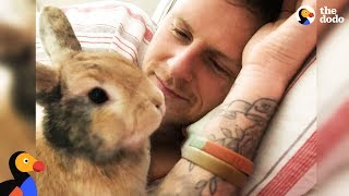 Amazing Rabbit Changes Man's Mind About Animals - CHIEF BRODY   The Dodo - Happy Father's Day!