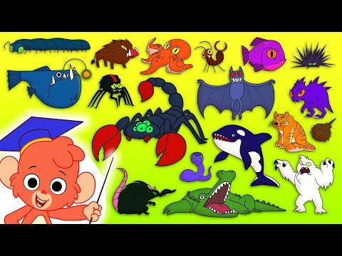 Animal ABC | Learn the alphabet with SCARY ANIMALS for children | abcd videos for kids A to Z esl