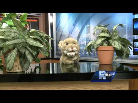 Virgil the Vole Visits WISN 12 News This Morning