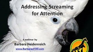 Addressing Parrots Screaming for Attention - Webinar Clip