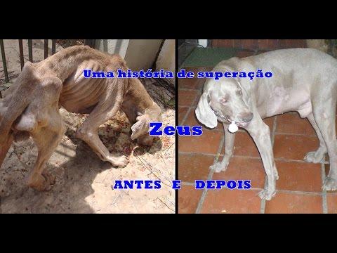 A história do Zeus cão
