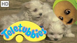Teletubbies: Puppies - Full Episode