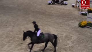 OE RT 3.  Tamara Zahid |  CSI1*  h 115 competition in two phases 25 .11 .16