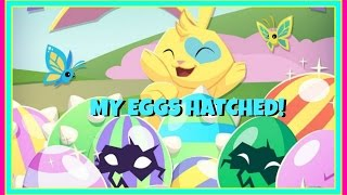 Animal Jam Eggstravaganza: My Eggs Hatched! So Many of the Same Kind! XD Happy Easter!