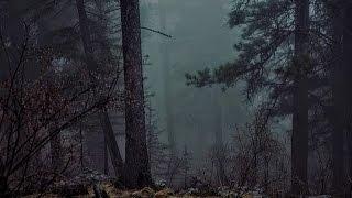 Douce Pluie En Forêt La Nuit - Détente Et Sommeil - Etude Méditation Massages Spa 🎧 6 Heures
