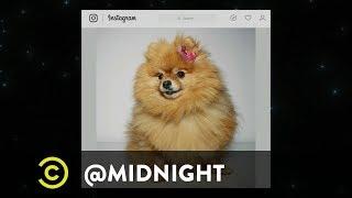 #DoggoLingo - @midnight with Chris Hardwick