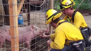 California firefighters battling wildfires perform random acts of kindness