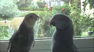 Marnie & Mr Pretty Bird