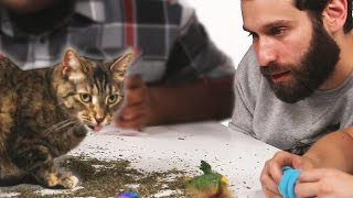 Stoned People Play With Cats On Catnip • The High Guys