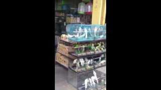 سوق الطيور في قوانزو - الصين