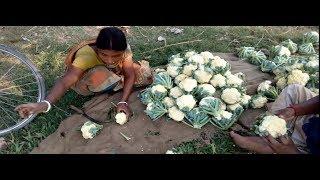 নতুন বউ এর সাথে কেমন মজা নিচ্ছে দাদা// Village Boudi Work Video //