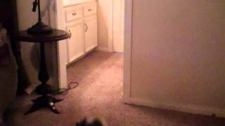 Me Playing With Rascal 7/26/2012 Part 1