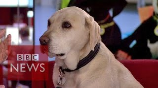 Let your dog choose your partner? BBC News
