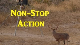 Kill Compilation Hunting in Texas AR-15, Bow, Rifle