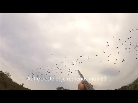 N°11 Chasse aux pigeons de migration en Corse du Sud 2013 2014