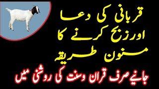 Qurbani ki Masnoon Dua in Urdu Hindi|Qurbani ke masail in Urduقربانی کی دعا