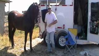 Why Horse Trainers and Lawyers are the Same - Horse Testing You- Rick Gore Horsemanship
