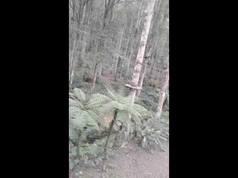 Mesum di hutan