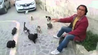 Ebu Hureyre'yi Örnek Alan Urfalı Hüseyin ve Sokak Kedileri