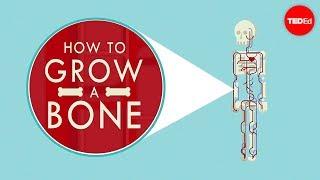 How to grow a bone - Nina Tandon