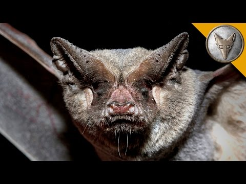 Catching Bats by Hand The Mexican Free Tailed Bat