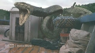 Anaconda Swallowed Andy Anderson | Anacondas: The Hunt for the Blood Orchid Movie Scene