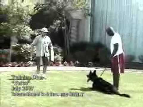 Xxx Mp4 Deion Sanders Dog From International K9 3gp Sex