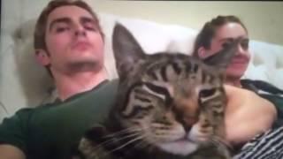 Dave Franco & Alison Brie cat dancing