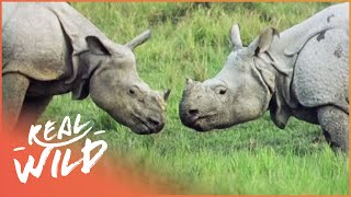 Armour Plated Rhino [Rhino Documentary] | Wild Things