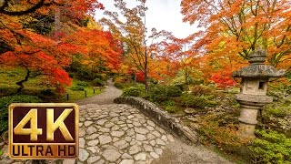 Japanese Garden 4K resolution - 1 hour  - Nature Sound for Relaxation - Autumn