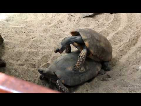 Xxx Mp4 Wild Animal Sex Turtles 3gp Sex