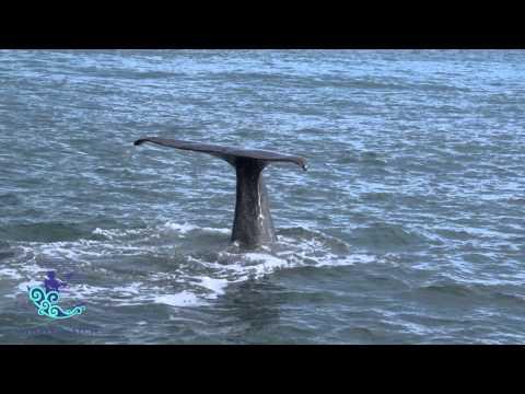 Xxx Mp4 Whale Watch Kaikoura 30 Sec Video 3gp Sex