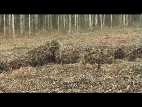 El bosque protector. Biomasa forestal