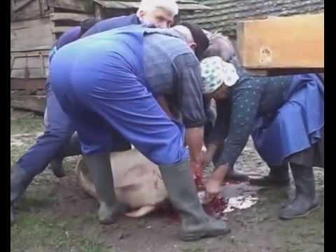 Hagyományőrző disznóvágás Nógrádon