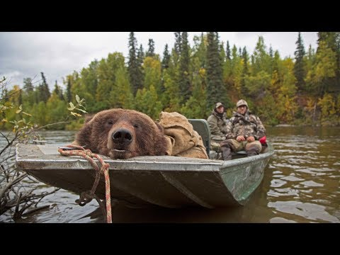 Xxx Mp4 Alaskan Brown Bear Hunt In The Fall Conservation Explained 3gp Sex