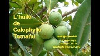 Huile de Calophylle Tamanu - Mon Bio Moulin à Dunkerque