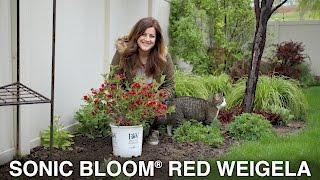 Sonic Bloom Red Weigela // Garden Answer