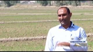Iran Rice cultivation, Summer 1398, Shoush county كاشت برنج شهرستان شوش ايران