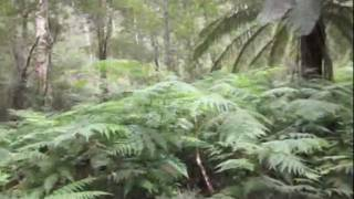 LLAMA PORN - (AUSTRALIA VLOG #1)