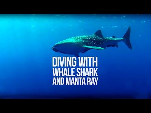 Whale Shark & Manta Ray- Bat Islands, Costa Rica