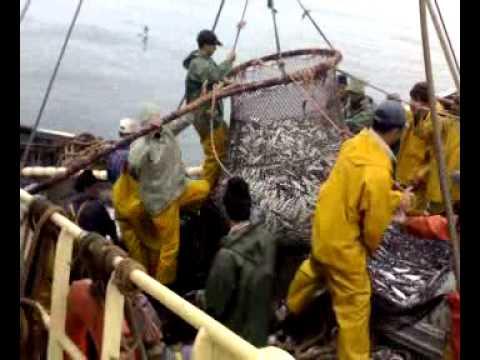 péche du sardine safi maroc