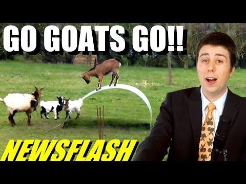 Xxx Mp4 Amazing Goats Balance On Metal Sheet NEWSFLASH 3gp Sex