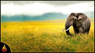 African Music | Wildlife Of Tanzania | Instrumental African Percussion