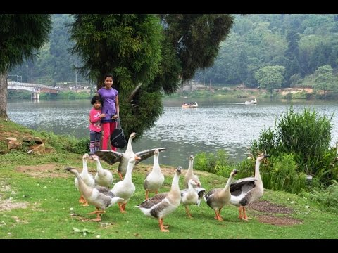 Mirik Sumendu Lake - Between Darjeeling and Siliguri, West Bengal, India