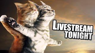 NATIONAL CAT DAY! - Livestream Tonight (October 30th, 2014)