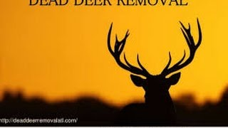 DEAD DEER REMOVAL NJ CALL TODAY FOR YOUR SAME DAY SERVICE (973) 388-9126