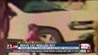 Hero cat saves boy from dog attack in Bakersfield - 23 ABC News report