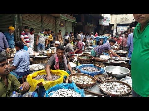 Xxx Mp4 Wondrous Fish Market Biggest Fish Market In Old Dhaka Bangladesh 3gp Sex