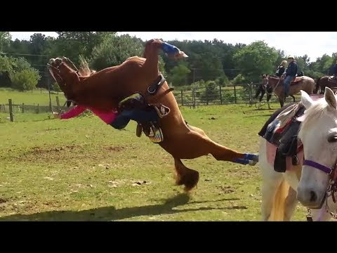 Xxx Mp4 Fail Horse Flips Backwards Onto Rider 3gp Sex